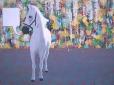 Paard 2, 160 x 120 cm, olieverf op doek, 2008
