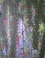 Konijn 4, 35 x 45 cm, olieverf op linnen, 2010