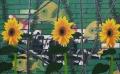 3 zonnebloemen en gorilla's, 160 x 100 cm, olieverf en spuitverf op linnen, 2014